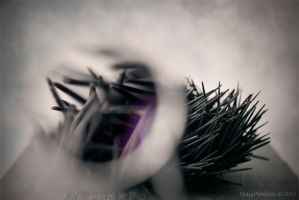 death of the sea urchin by lomihnat