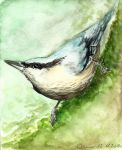 Nuthatch by OrangeDomino