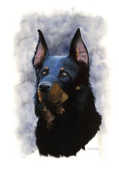 Beauceron by saraquarelle