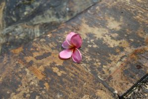 One Lonely Flower by dzulman