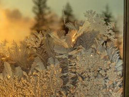 yesterday frost by Nipntuck3