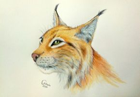 Watercolor lynx by red-fox-child