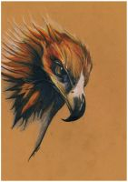 Australian Wedge-tailed Eagle by Burl-C