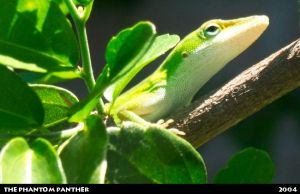 Lizard on a Branch 03 by phantompanther