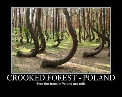 Poland's Forests by GuardianKrayla