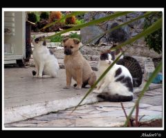 Dog vs Cats by AbadonV