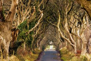The Dark Hedges by Glenn0o7