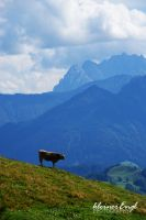 lonesome cow by kleinerEngl