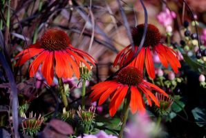 late summer colours by augenweide