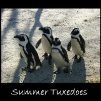 Summer Tuxedoes by SDMcCarty