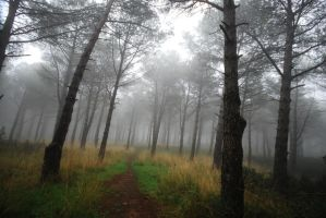foggy trees stock 12 by chirkhef-stock