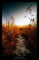Golden Path by AaronLewis