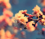 Bloom IV by MyLifeThroughTheLens
