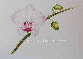 Orchid - watercolor by LittleMissRaven