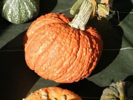 Gourd 2 by Variety-Stock