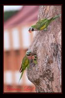 Parrots 3 by Heavens-Leaf