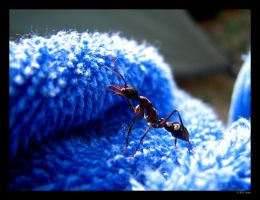 Ant with the blues II by mercyop