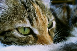 My cat Mosya by Deviantart-gleb