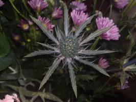 Thistle by KillTheLights98