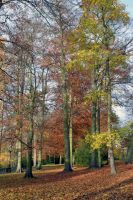 Mid November Beech And Sycamore In Kelsey Park by aegiandyad