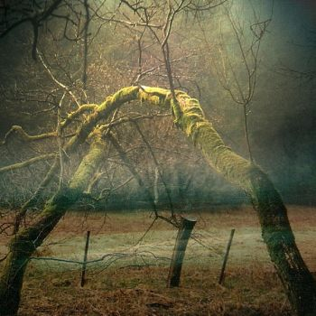 .into the trees by weltengang