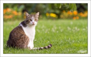 Leo the Cat by sG-Photographie