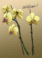 Orchids by killerbrownie37