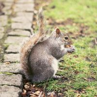Squirrel by Sarah-BK