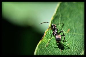 Ant Hangin' out on a leaf by NOS2002
