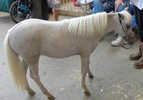 Miniature horse by ponygirl0316