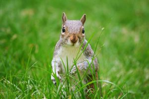 I saw a squirrel by thalija