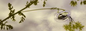 FROG IN REFLECTION by ANOZER