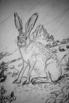Texas Jackrabbit WIP by JeffreyMcClure