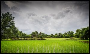 Wet season by Dominion-Photography