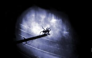 Spy Der Spider by haymakers9th