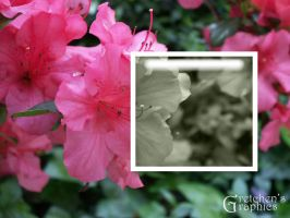 Azalea Boxed by DigitalDoodleDesigns