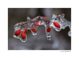 Ice VIII by butterfly36rs
