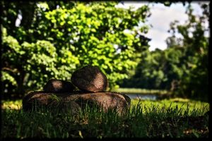 Resting under the trees... by Yancis