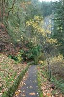 Stone Pathway with Leaves by happeningstock