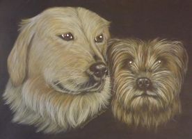golden retriever border terrier comision by shirls-art