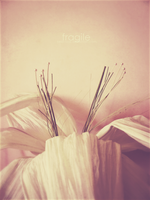 Fragile by Kezzi-Rose