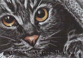 ATC Cat eyes by WitchiArt