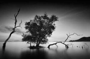 generations by howpin