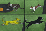 GCC D+ P+ Flyball by MidnightAyaChan