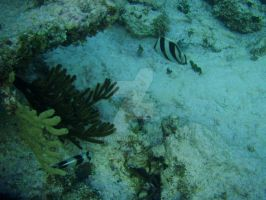 TME Akumal, Mexico: Two Pair by Namyr