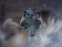 .:: Black Dawn :: by KovoWolf