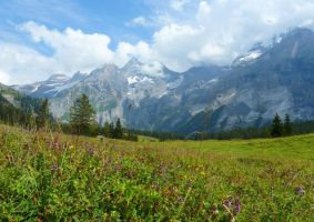Alpine Meadow by Cadaska