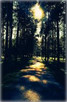 Shine in the forest by Morsoilija