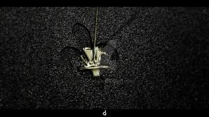 ...gold filled by TRL-phorce