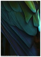 Scarlet Macaw 022 by ShineOverShadow